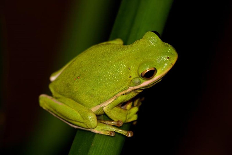 Field Trip Worksheet Frog And Toad Scavenger Hunt