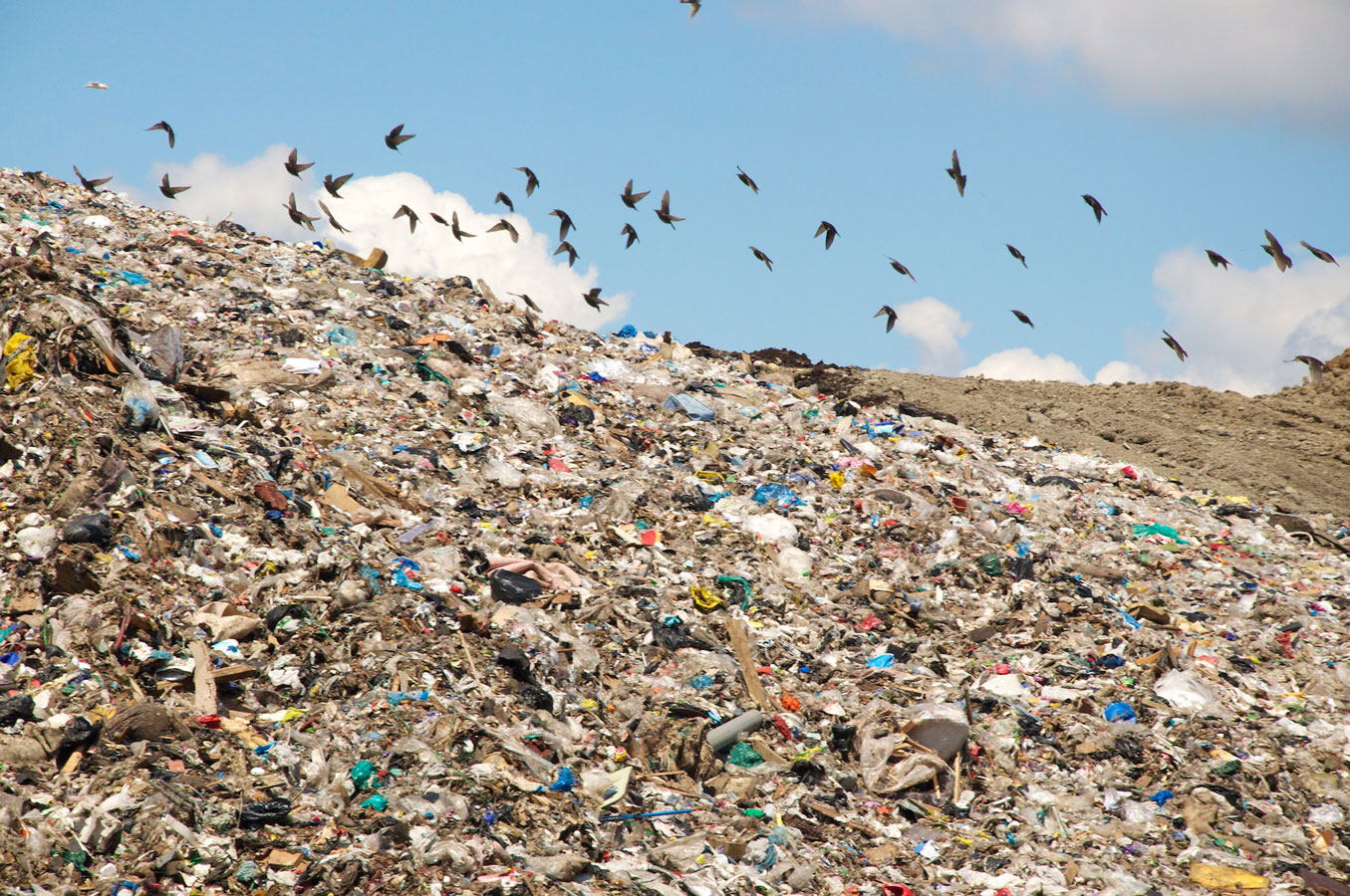 Buy Home Plans Lesson Plan Reducing San Francisco S Landfill Waste