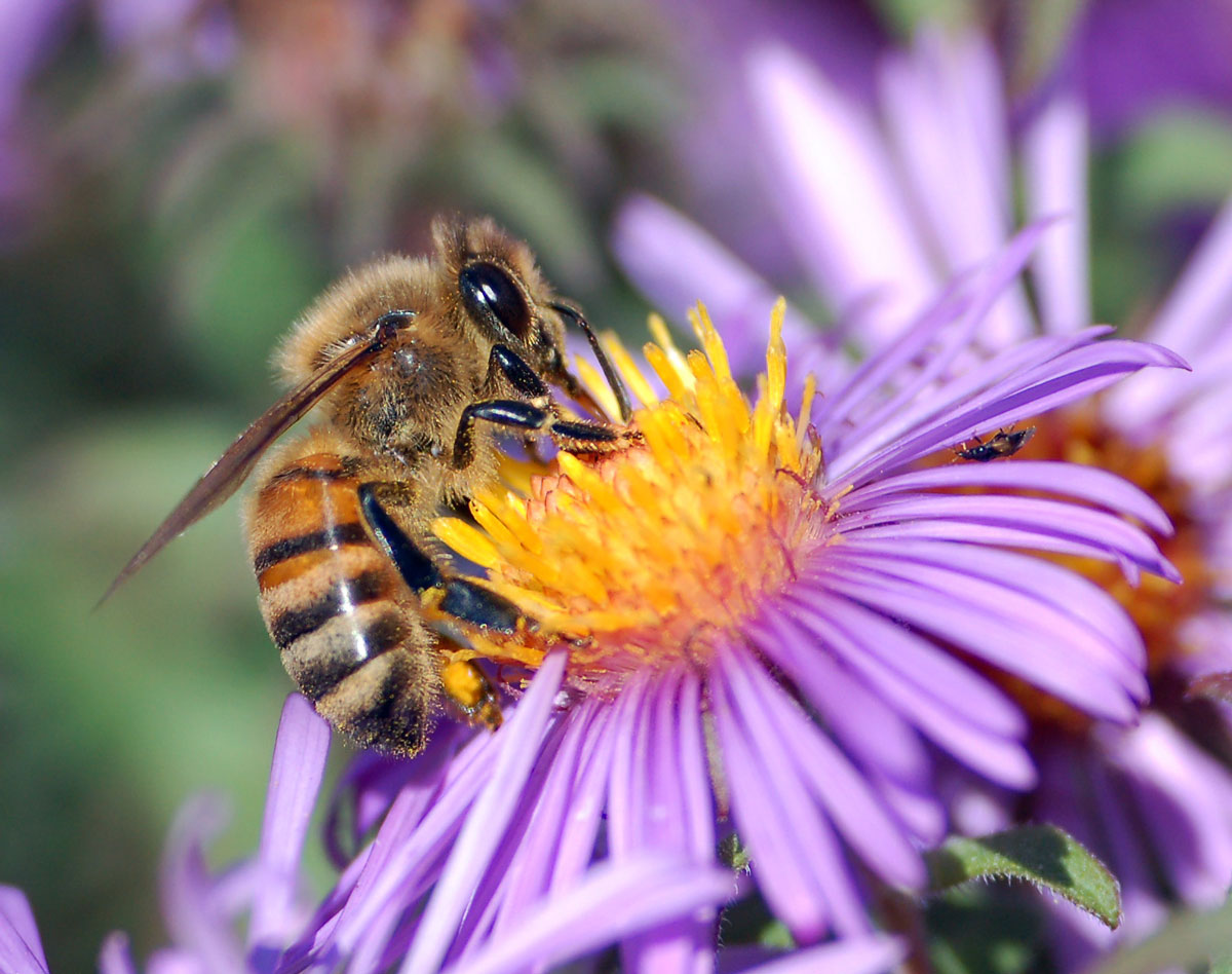 Lesson Plan | Flowers Seeking Pollinators