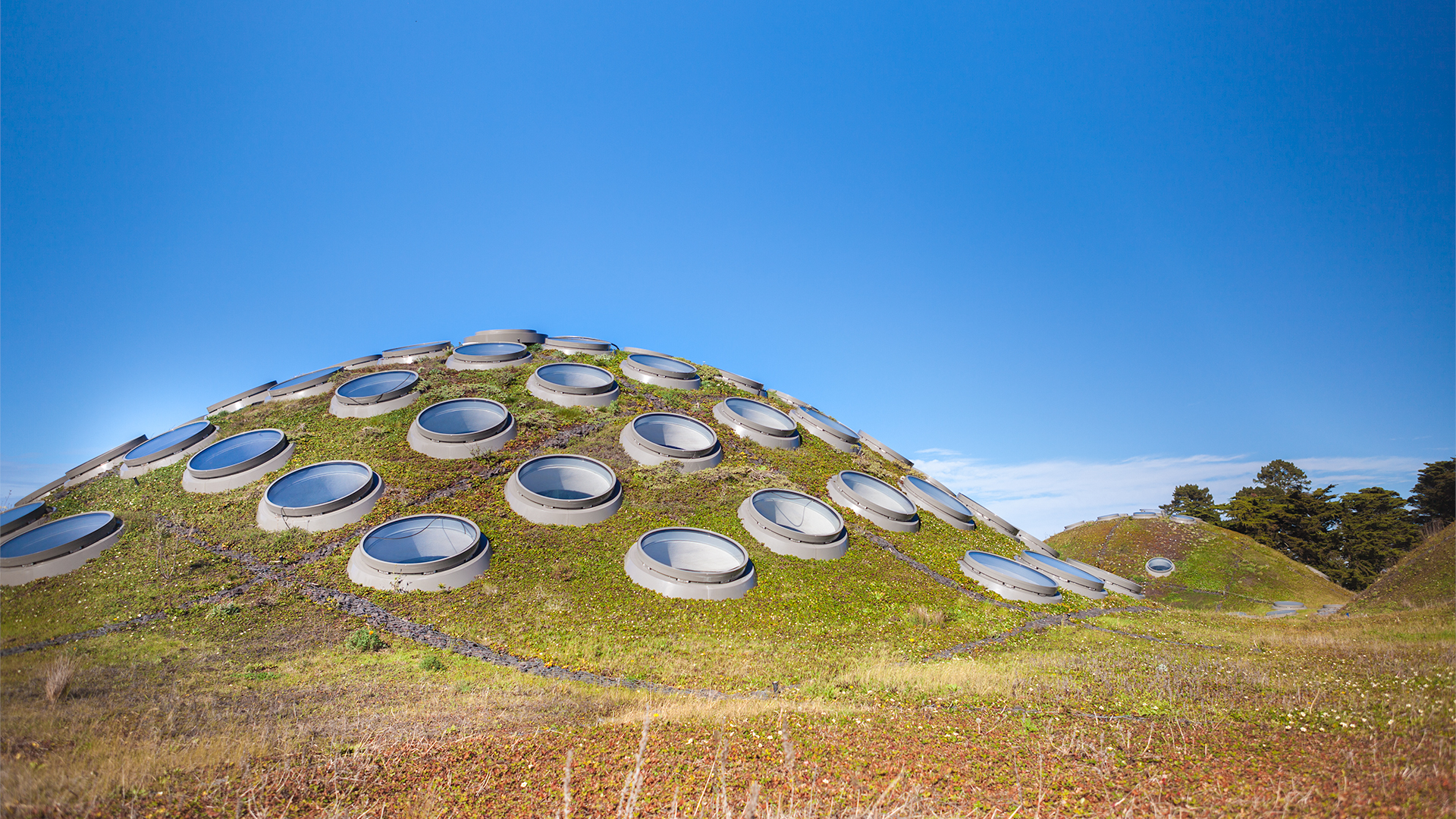 Living Roof | California Academy of Sciences
