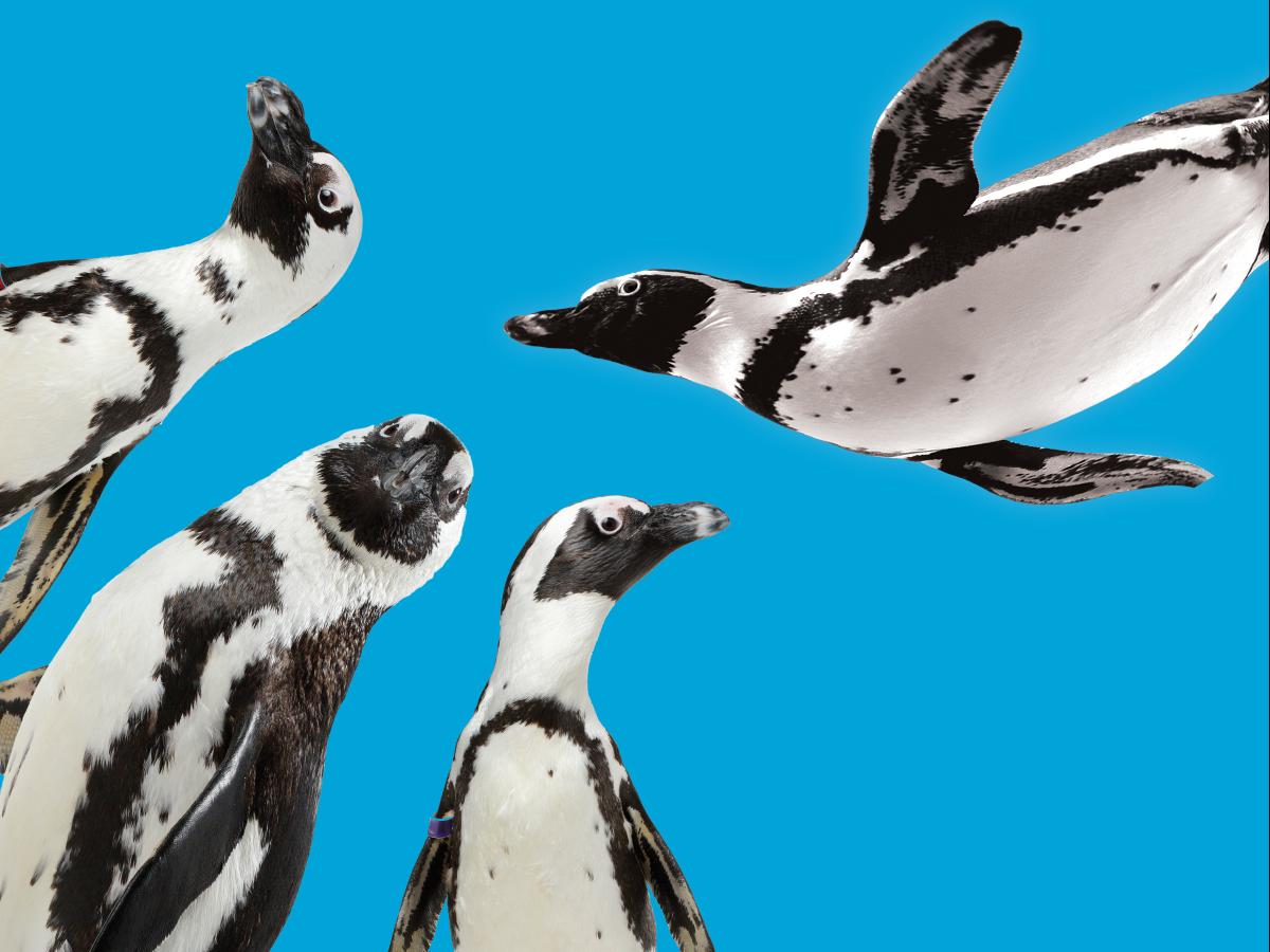 penguin entry fee