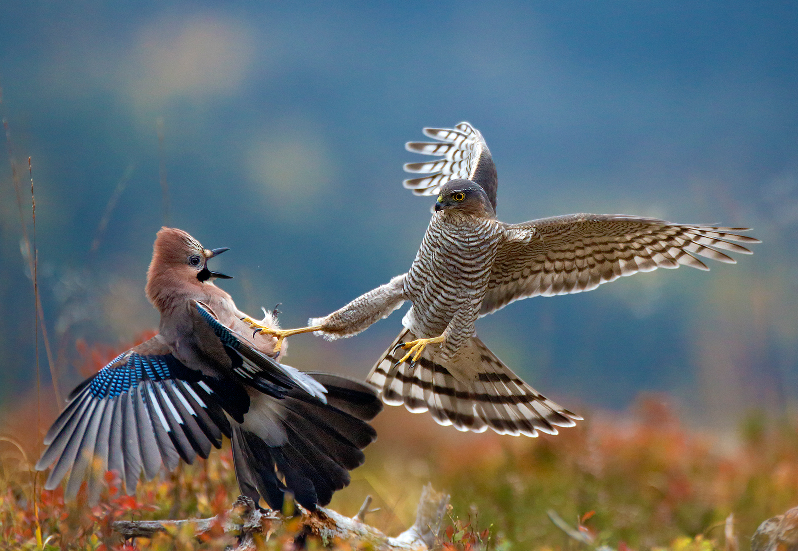 BigPicture: Natural World Photography Competition now open ...