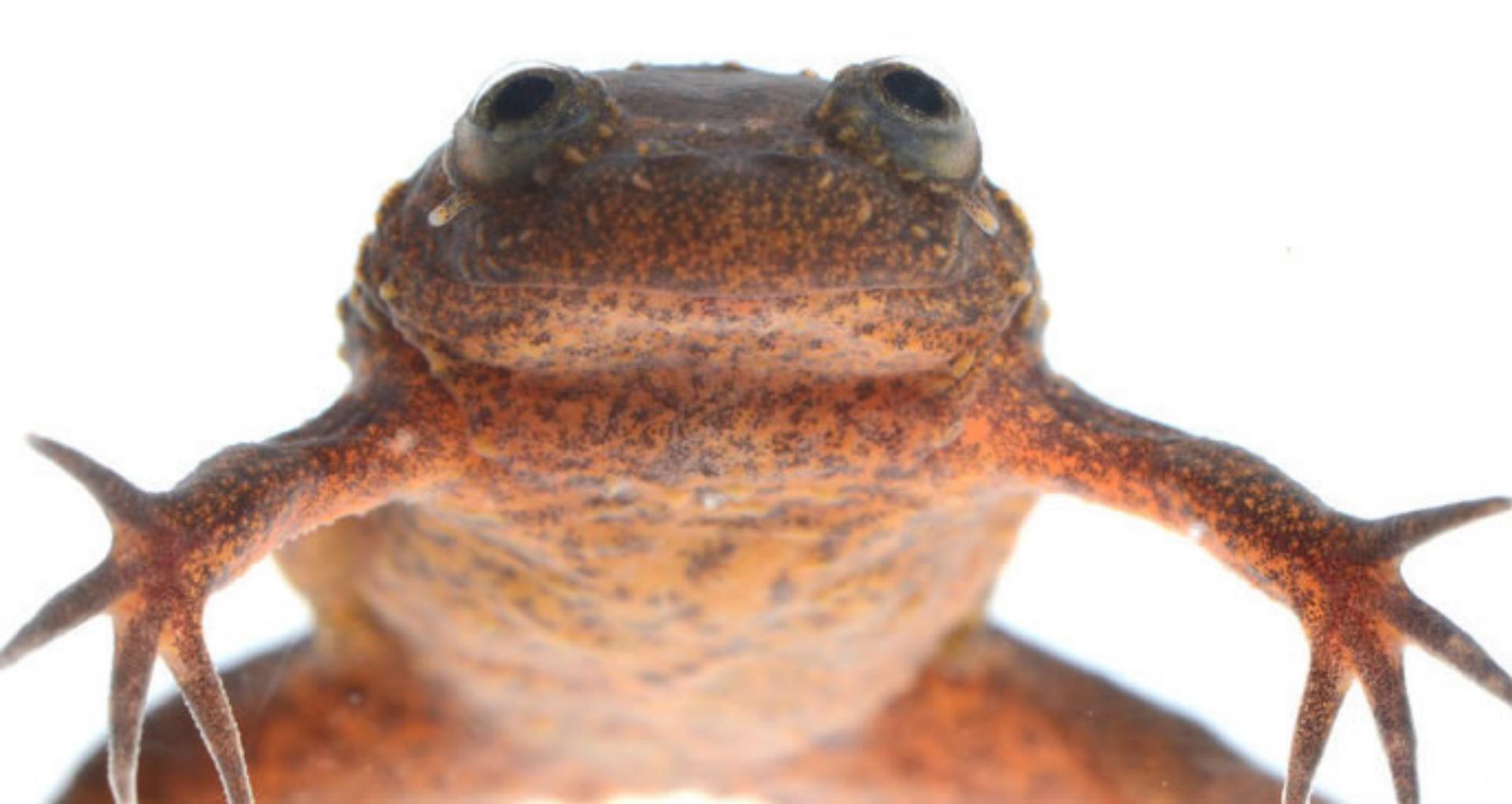Cameroon Amphibian Survey