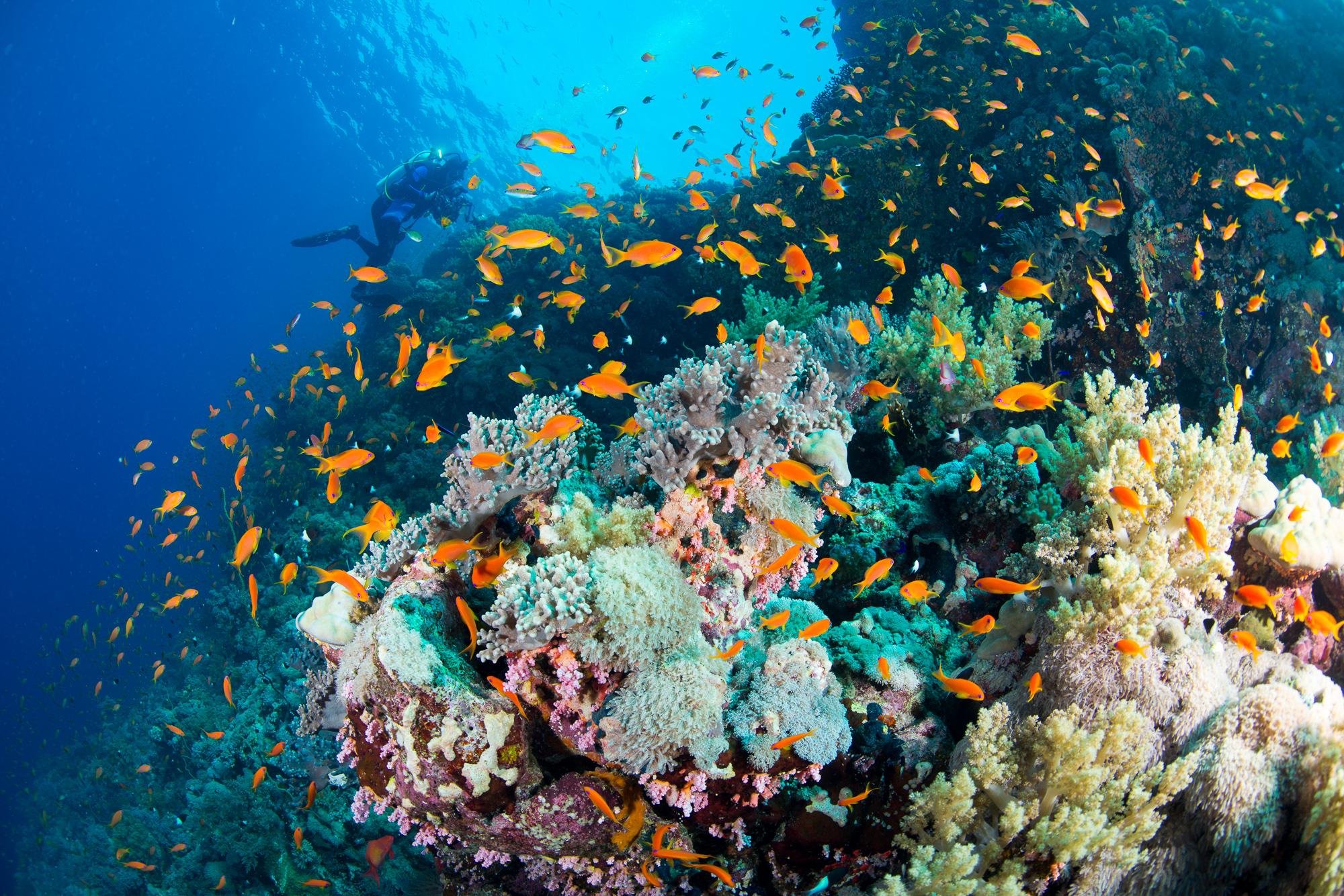Red Sea Biodiversity Survey