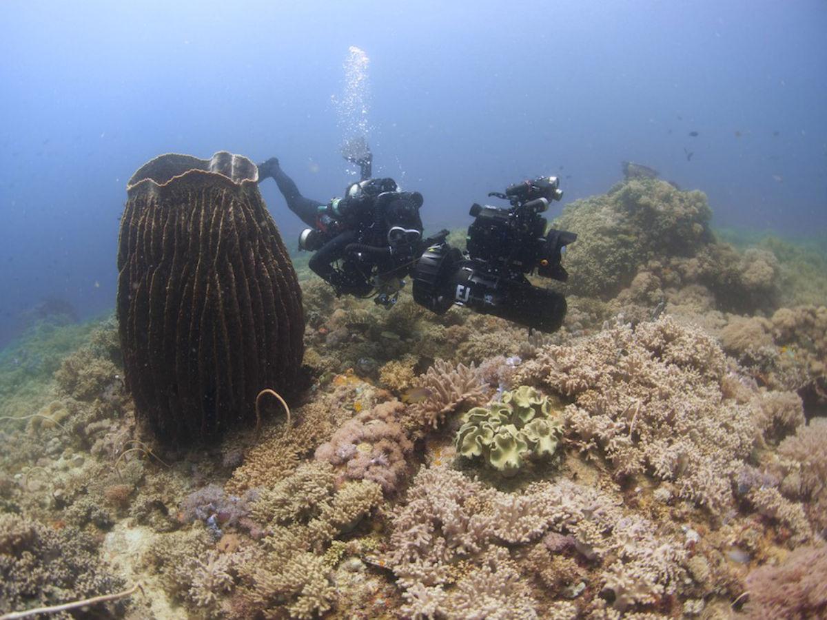 2014 Philippine Biodiversity Expedition