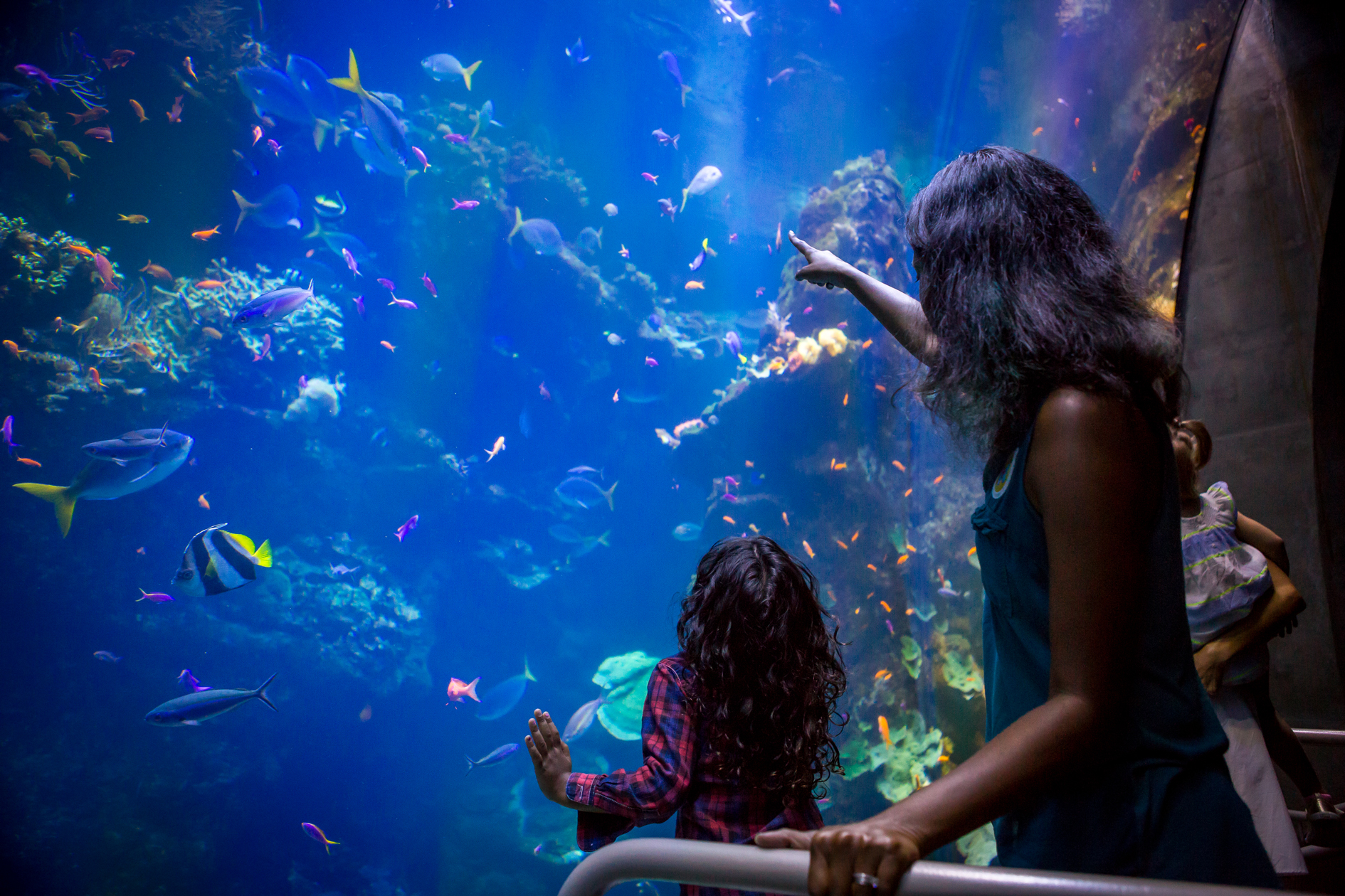 Steinhart Aquarium California Academy Of Sciences