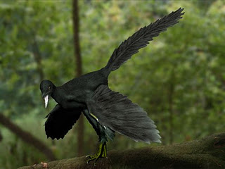 Archaeopteryx_black_NT