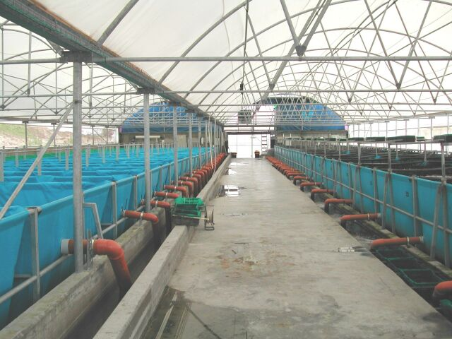 Biosecure_KOI_breeding_and_growing_intensive_facility_in_Israel