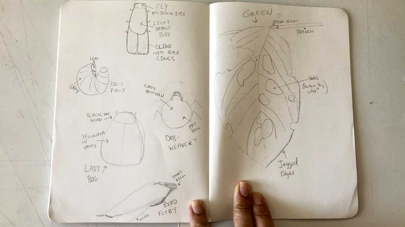 A notebook filled with sketches of roly-polys and other bugs.