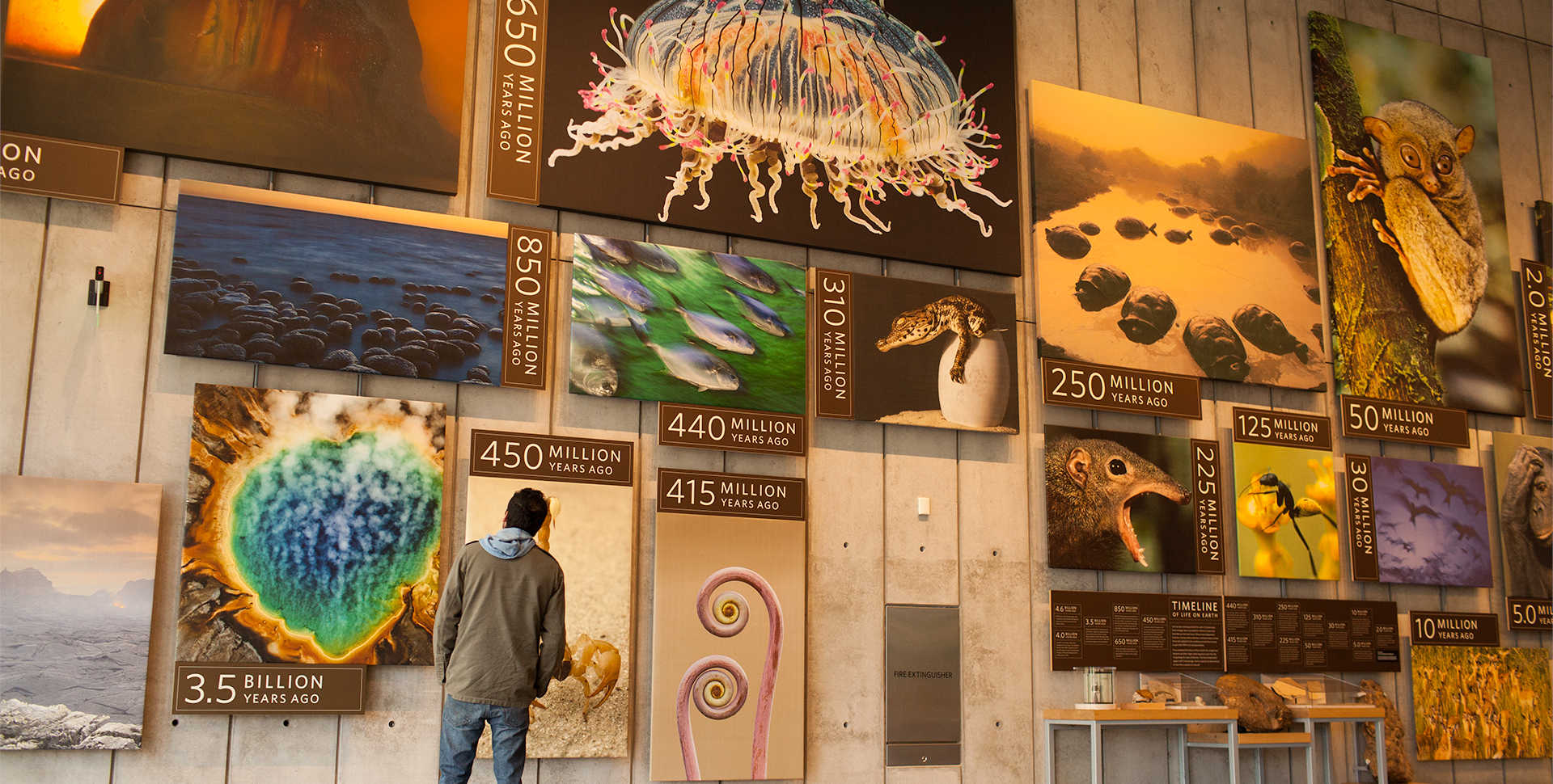 A striking visual timeline of the evolution of life on Earth fills one massive wall in the Kimball Natural History Museum.