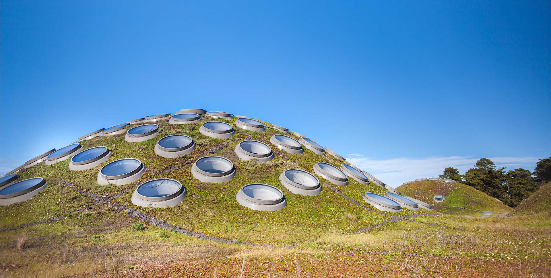 Living Roof The Academy S Signature Green Roof