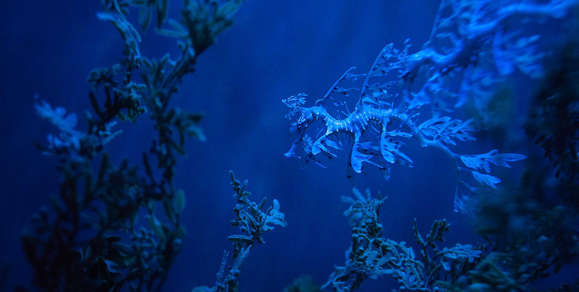 Environmental Hope >> Steinhart Aquarium, an Interactive San Francisco Aquarium