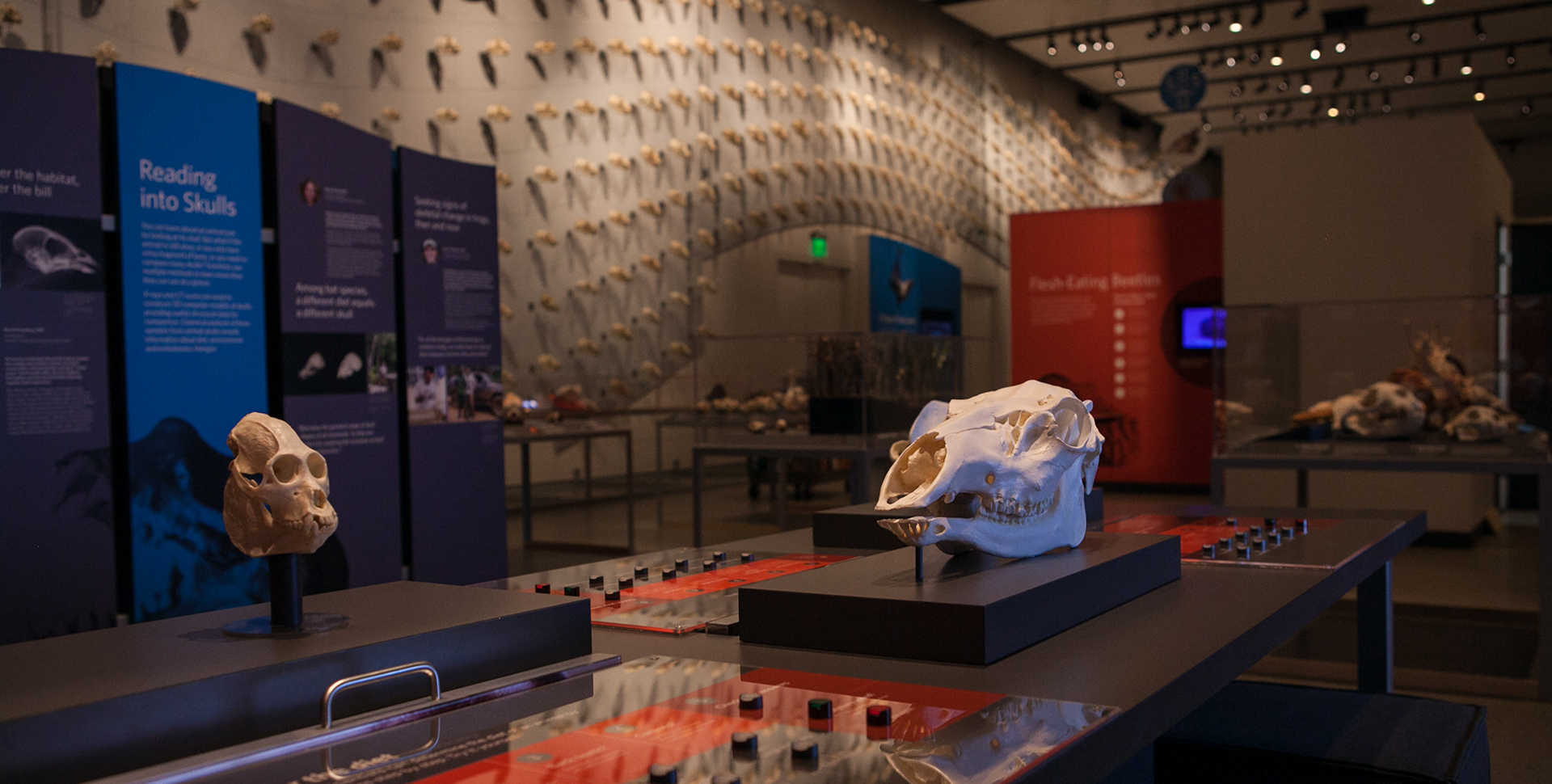 A 40,000-square-foot exhibit showcases more than 600 different skulls.