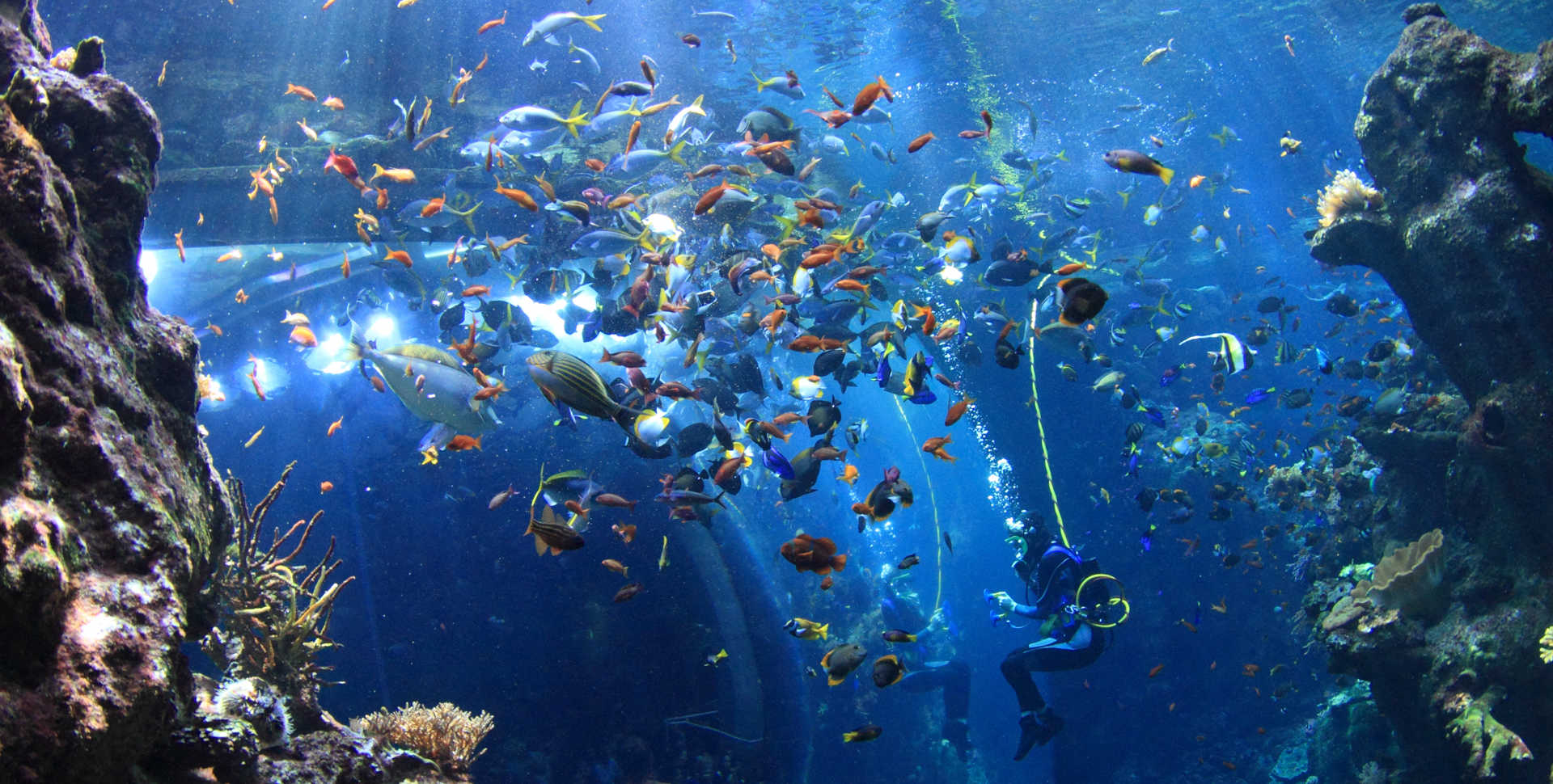 A scuba diver in the Phlippine Coral Reef exhibit.