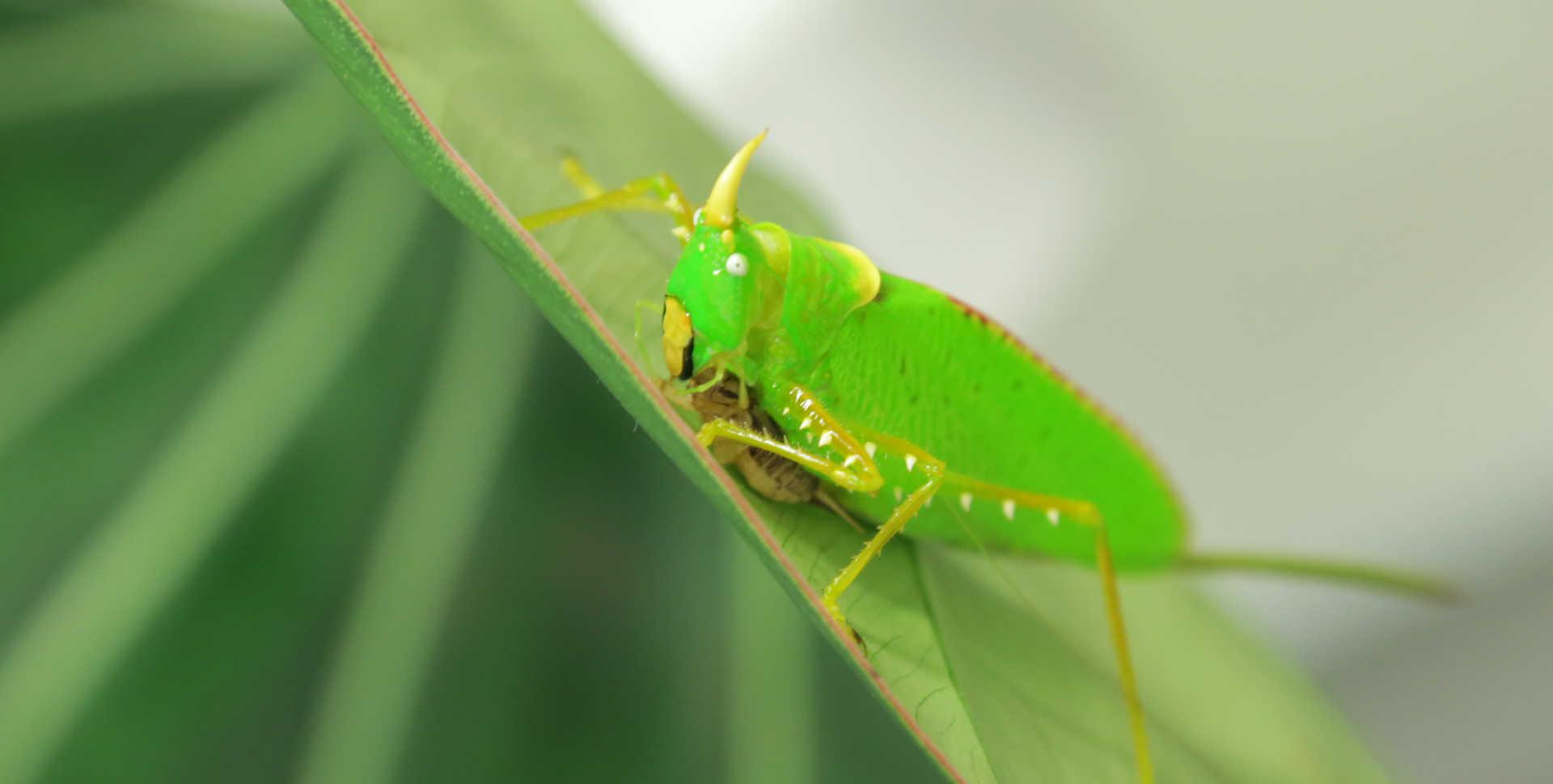 3D Earth: Rainforests katydid