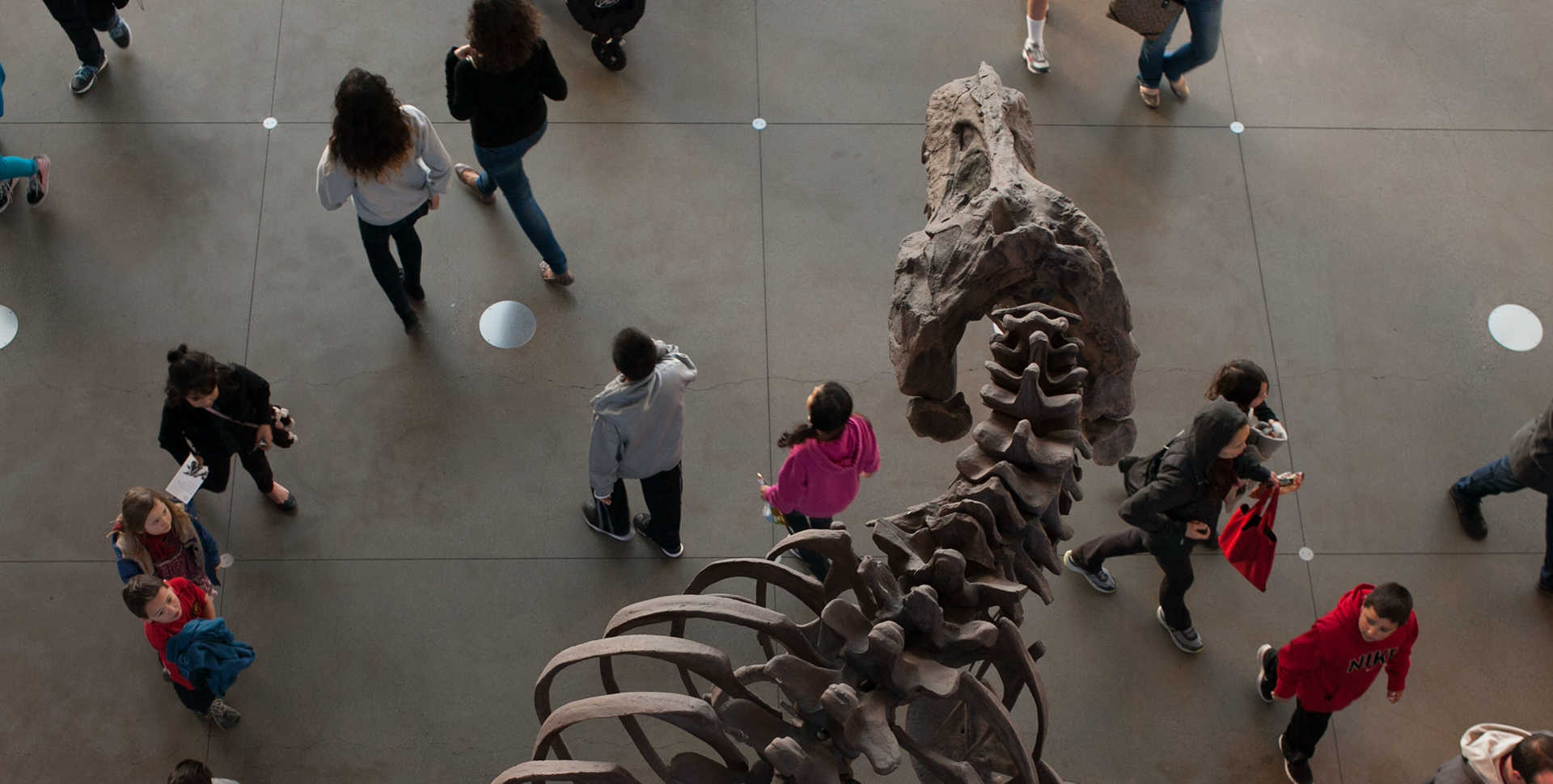 Overhead view of visitors and T. Rex skeleton in the lobby of California Academy of Sciences