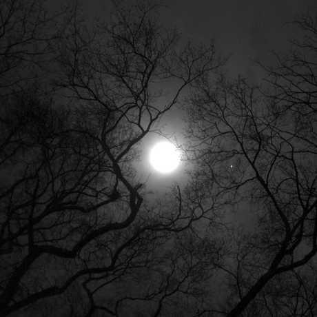 moon lore calacademy morrison planetarium nightlife