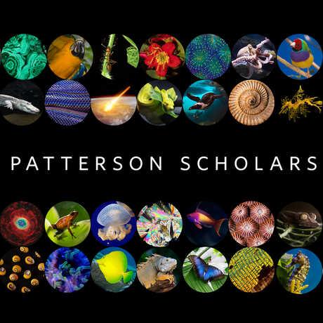 Patterson Scholars graphic