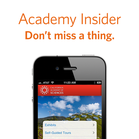 Academy Insider - Do not miss a thing.