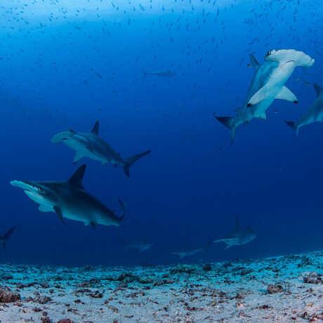 Enric Sala/National Geographic