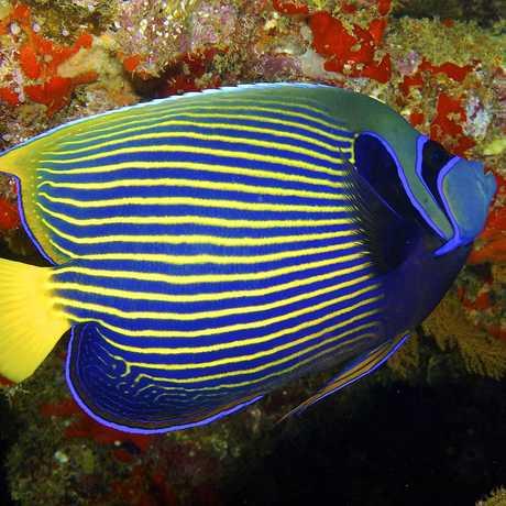 Coral reef fish swimming