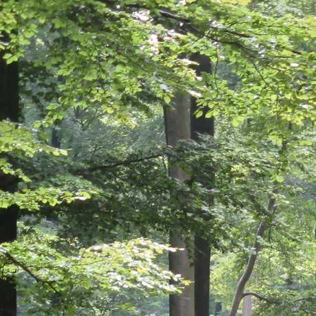 Sonian Forest in Belgium, Donarreiskoffer/Wikipedia