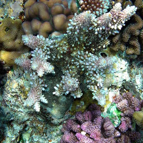Coral reef, Papua New Guinea, Brocken Inaglory/Wikipedia