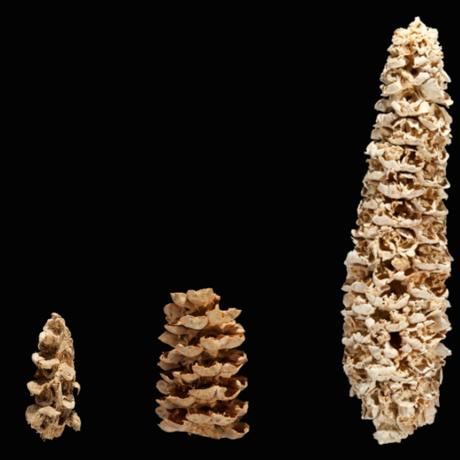 Corn through the years