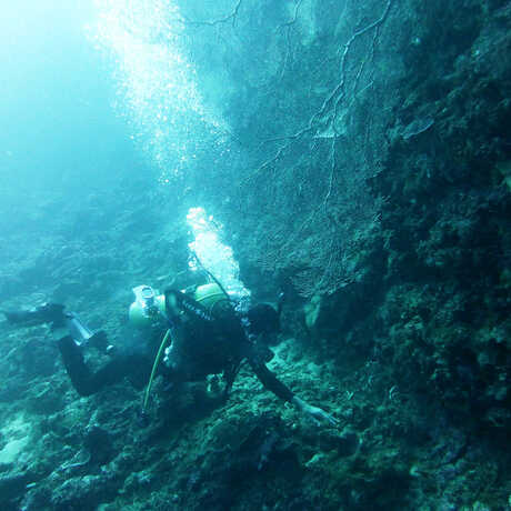 A diver off of Lubang island during the 2014 Philippine Biodiversity expedition.