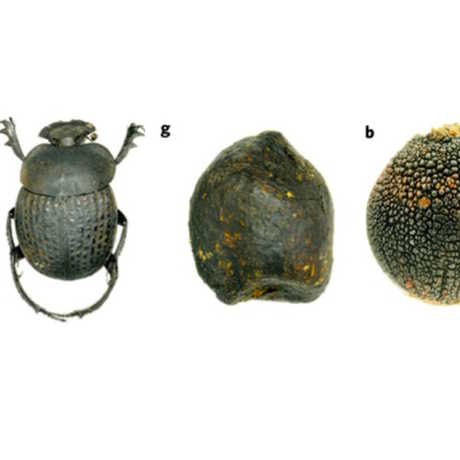 Beetle, Dung and Seed, Nature Plants