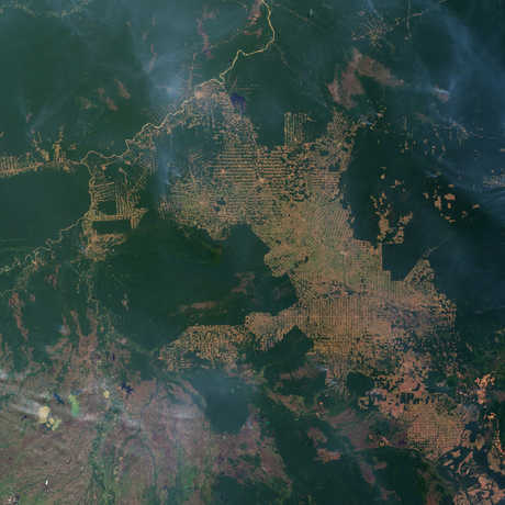 Slash-and-burn farming in the state of Rondônia, western Brazil, NASA Earth Observatory