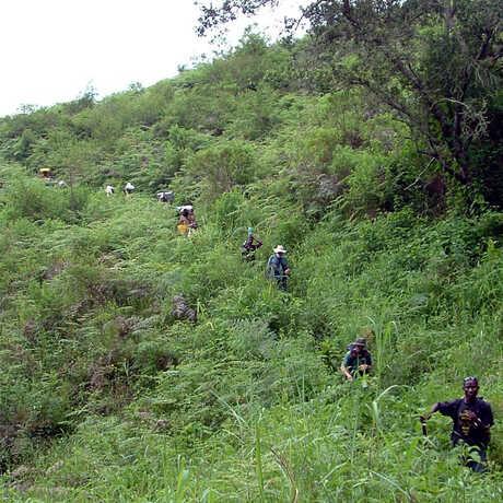Hiking into the Udzungwa mountains