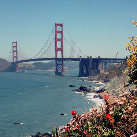 Golden Gate Bridge with coastal flora