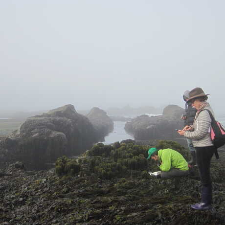 People in the tidepools observing seaweed and animals with lots of fog.
