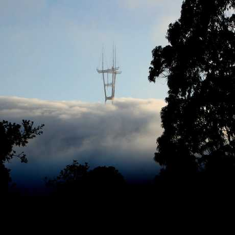 View, through trees, of Sutro tower poking through the clouds