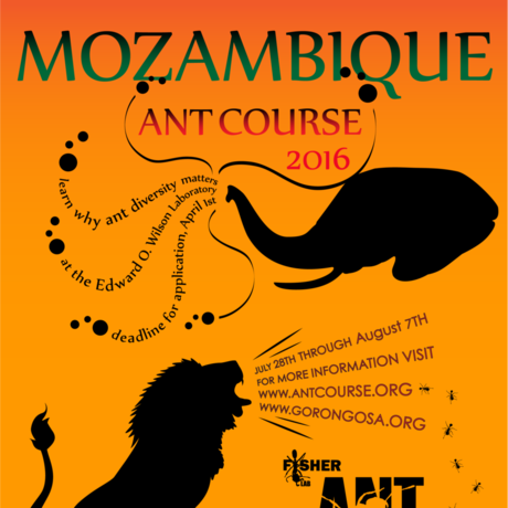 Ant Course Flyer