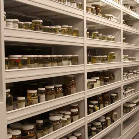 Academy herpetology collections