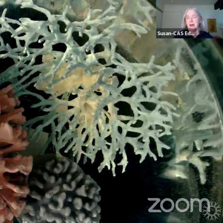 An Academy educator shows a demonstration with model coral in an aquarium.