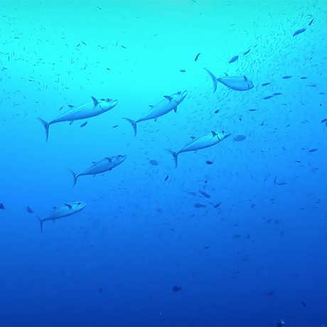 Fish in a blue sea