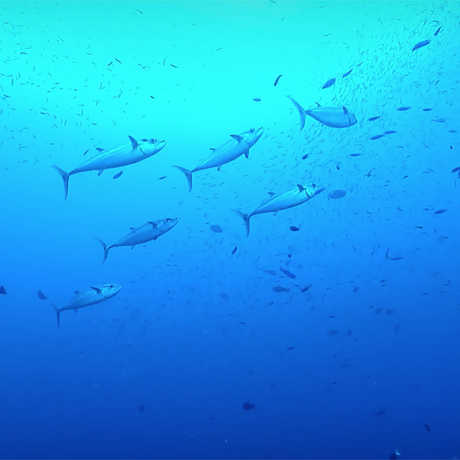 Fish in a blue sea
