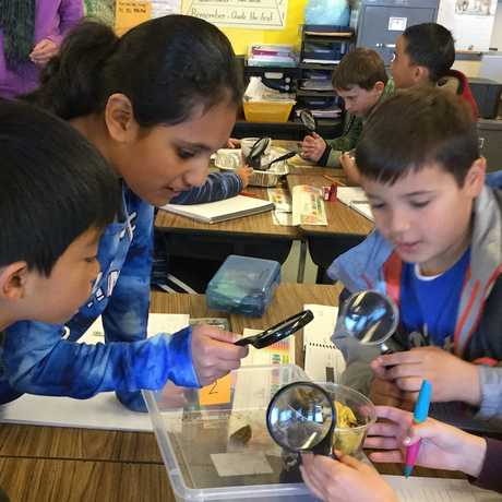 Students investigating decomposition