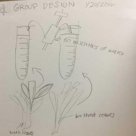 Celery plan
