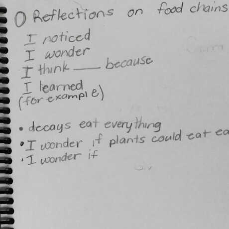 Reflecting on food chains