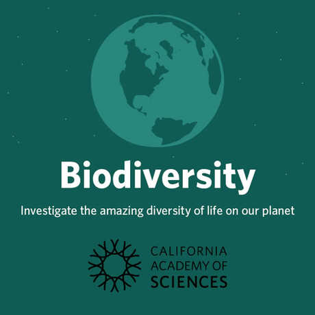 Biodiversity: investigate the amazing diversity of life on our planet