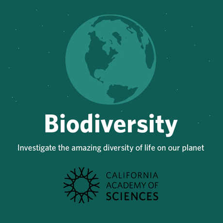 Biodiversity course wordmark