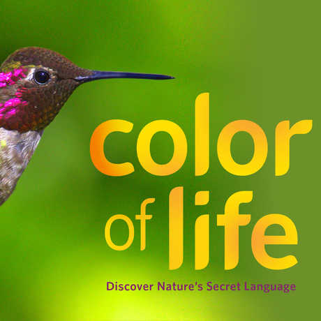 Hummingbird from Color of Life exhibit