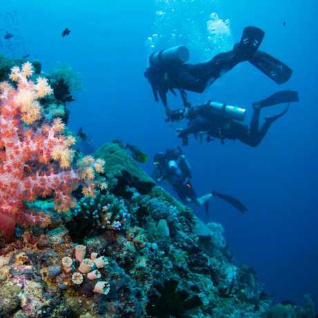 Academy divers in the Philippine coral reef