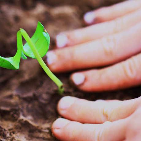 child planting seedling