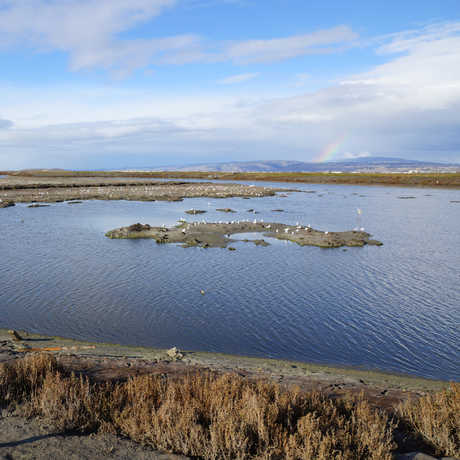 SF Bay National Wildlife Refuge