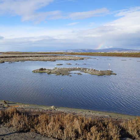 SF Bay National Wildlife Refuge